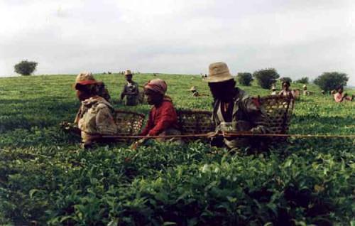 Afrique018
